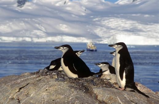 20150418-Antarctica  (7 of 34)